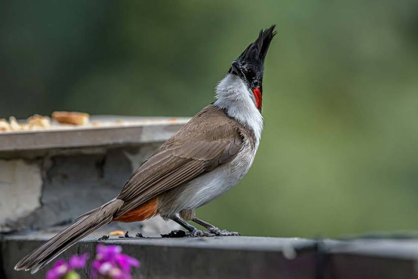 Baptism By Bulbul: The Joy Of The Novice Bird Lover Spilleth Over