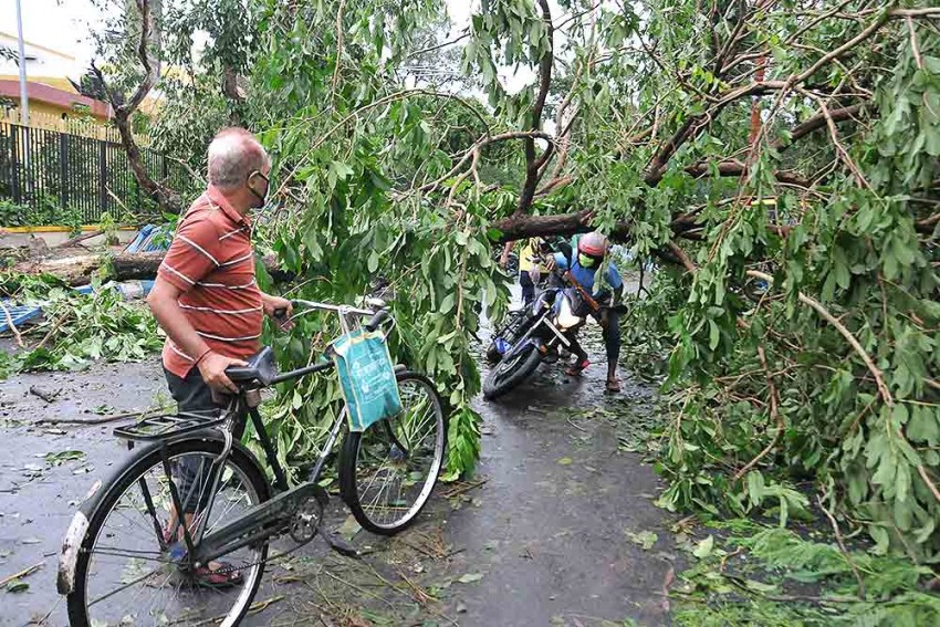 Amphan Diary: How A Jurassic Storm Uprooted Bengal's Trees And Lives In One Evening