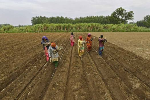 Strengthening Agricultural Marketing Opportunities For Farmers Through e-NAM