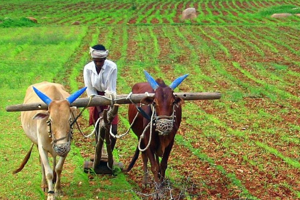 How India and Africa Can Start A Revolution In Agriculture And Food Security
