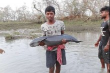 In Rare Incident, Youth Rescues Dolphin Washed Ashore Village In Bengal