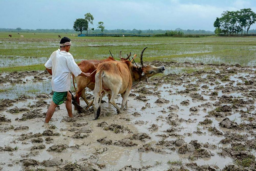 Govt Approves MSP For 14 Kharif Crops, Hikes Support Price For Paddy, Cotton