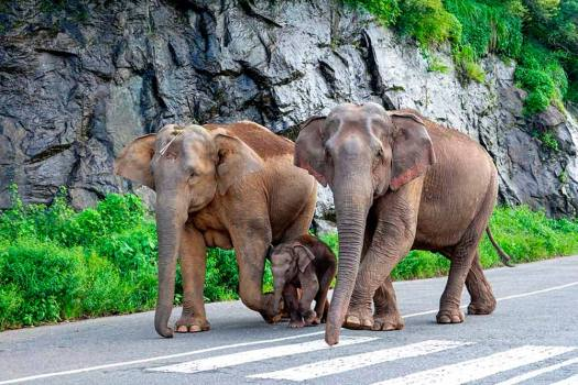 Bihar Man Wills His Property To Two Elephants, Says One Of Them Saved His Life