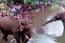 Kerala Elephant Tragedy: Another Jumbo Suspected To Have Been Killed By Fire Crackers In Mouth