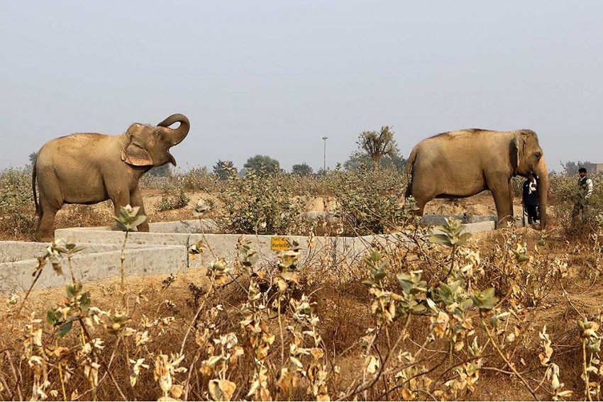 In The Land Of Ganesha, Elephants Imperiled By Human Need And Greed