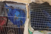 Kangaroo, Tortoises, Macaws Rescued From Smugglers In Assam