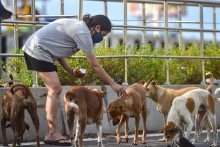 Nagaland Bans Sale And Consumption Of Dog Meat Due To Animal Cruelty