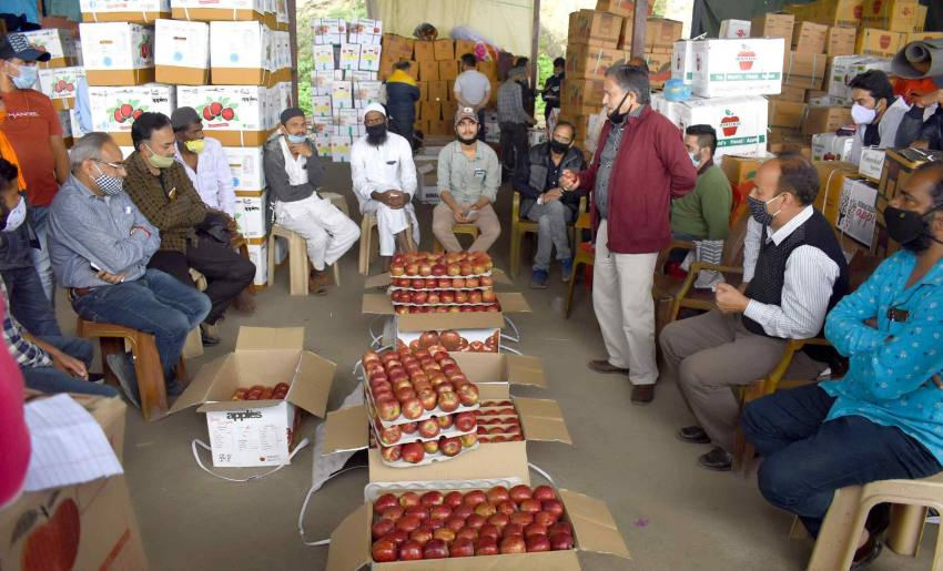 Despite Lockdown, Himachal Apples Fetch Better Prices Than Last Year In Wholesale Markets