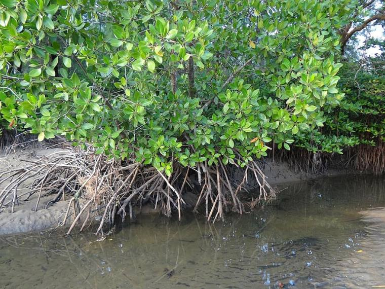 Mangroves Destruction To Blame For Flooding In Mumbai, Say Experts