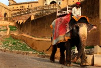 Rampant Elephant Deaths In Jaipur; Owners Say Inactivity Due To Covid-19 Could Be Reason