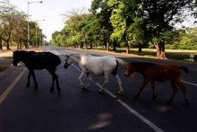 Horse Electrocuted In Delhi's Nizamuddin Area ; Locals Blame Overflowing Sewers