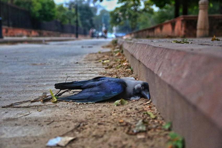 Centre Confirms Bird Flu In 7 States; Test Results For Delhi, Maharashtra Samples Awaited