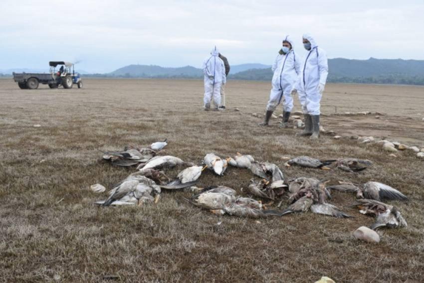 Bird Flu: Shimla's Himalayan Aviary Downs Shutters; Authorities Ramp Up Efforts To Contain Spread