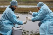 Bird Flu: Jharkhand, UP Report Bird Deaths, Culling Ordered In Maharashtra