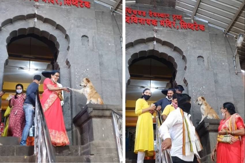 Watch: Viral Video Of 'Dog Swami' Blessing Devotees At Maharashtra Temple