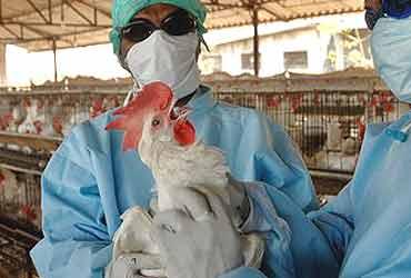 Bird Flu: Chhattisgarh Records First Bird Flu Case In Balod District