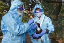 Dead Owl In Delhi Zoo Found To Have Bird Flu