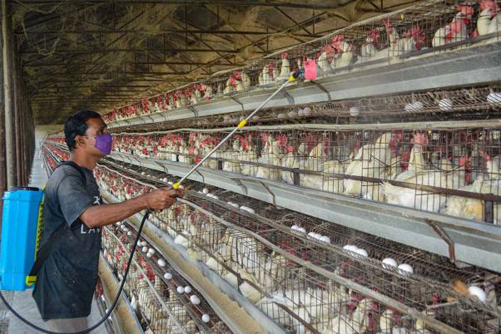 Avian Flu In India: What Should You Do To Stay Safe?