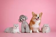Covid Lockdown: Pet Food Sales Sour 20 Per Cent As Pet Adoption Increases In 2020