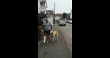 Owner Spends £300 To Treat His Dog's Limping; Finds Out He Was Copying Him Out Of Sympathy