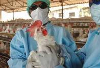 Red Fort Bird Flu Sample Tests Positive, Monument Closed Till Jan 26: Officials