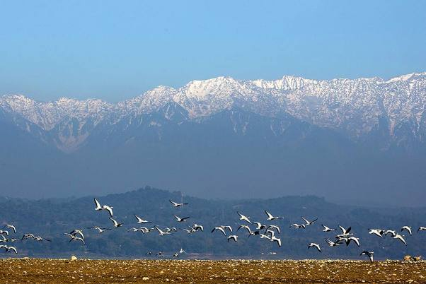 Ban On Tourism, Human Activity At Pong Dam Following Death Of 1,200 Migratory Birds