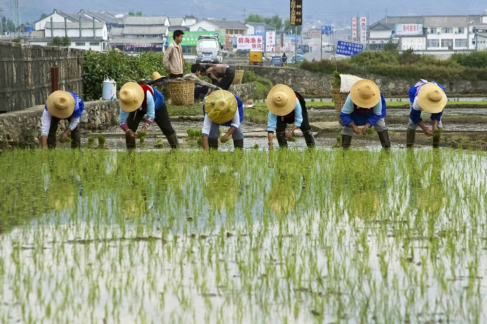 Not Just Manufactured Items, China Wants To Focus On Home-Grown Seeds