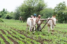 How Farm Sector Salvaged India's GDP