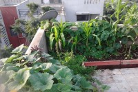5 Tips To Start Your Terrace Garden