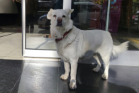 This Loyal Dog Waited At A Hospital For Days To Meet Sick Owner