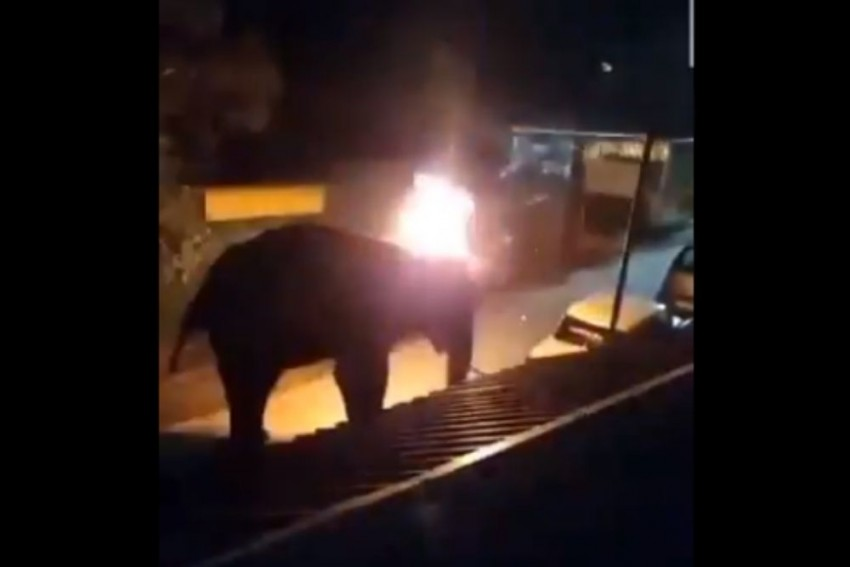 Elephant Dies Tragic Death After Two Men Throw Burning Object At It In Tamil Nadu