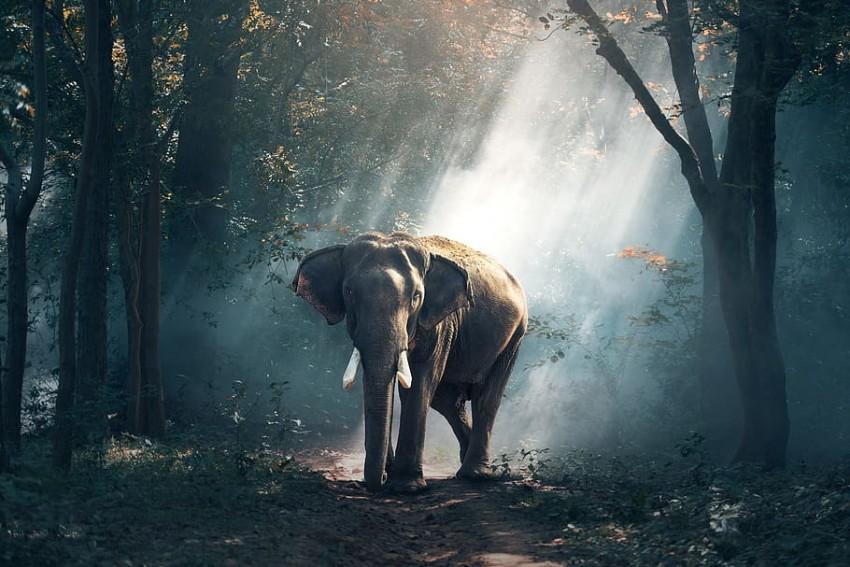 Kerala: Wild Elephant Tramples Woman Tourist To Death
