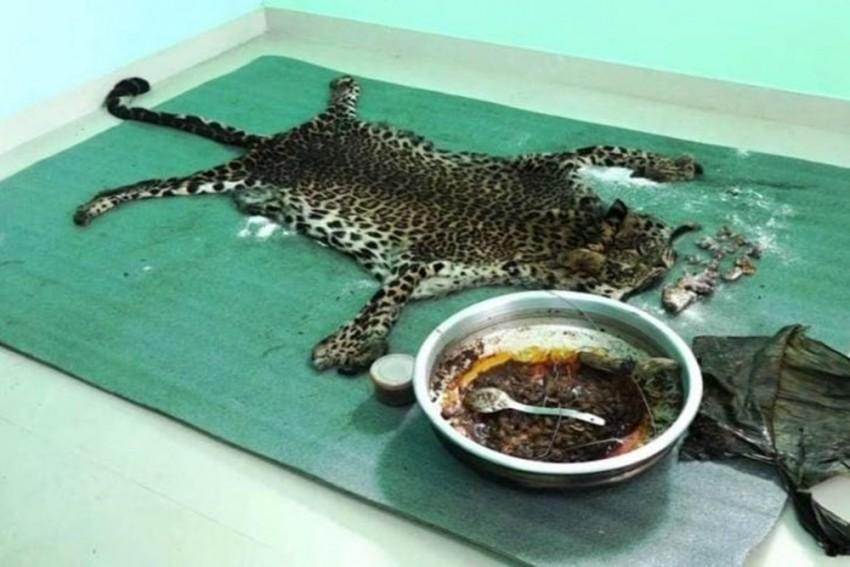 Five Men Arrested In Kerala For Killing A Leopard, Eating Its Meat