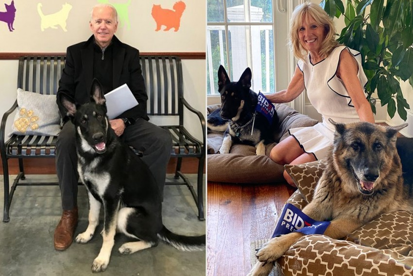 Joe Biden's 'First Dogs' Move Into White House, Know The Significance Of Presidential Pets