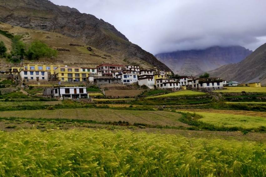 Feral Dogs Pose A Threat To Biodiversity In The Cold Deserts Of Spiti