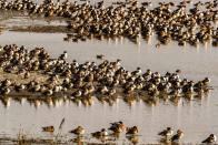 Avian Flu Breaks Out In Rajasthan, Madhya Pradesh, Himachal Pradesh And Kerala
