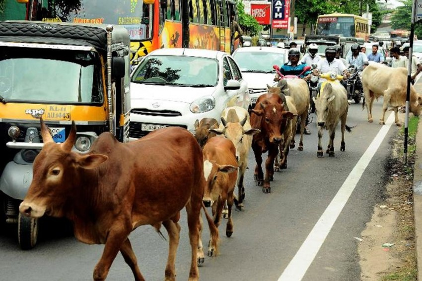 In A First, India Is Conducting Nationwide Online Cow Exam For Free; Here's How To Enrol