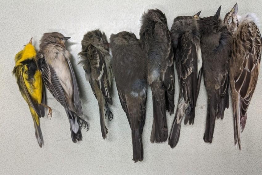 Mass Bird Deaths In Delhi, Officials Inspect Avian Flu Angle