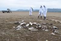 65 Bird Flu Teams Monitoring Virus Impact On Migratory, Local Birds: Himachal CM