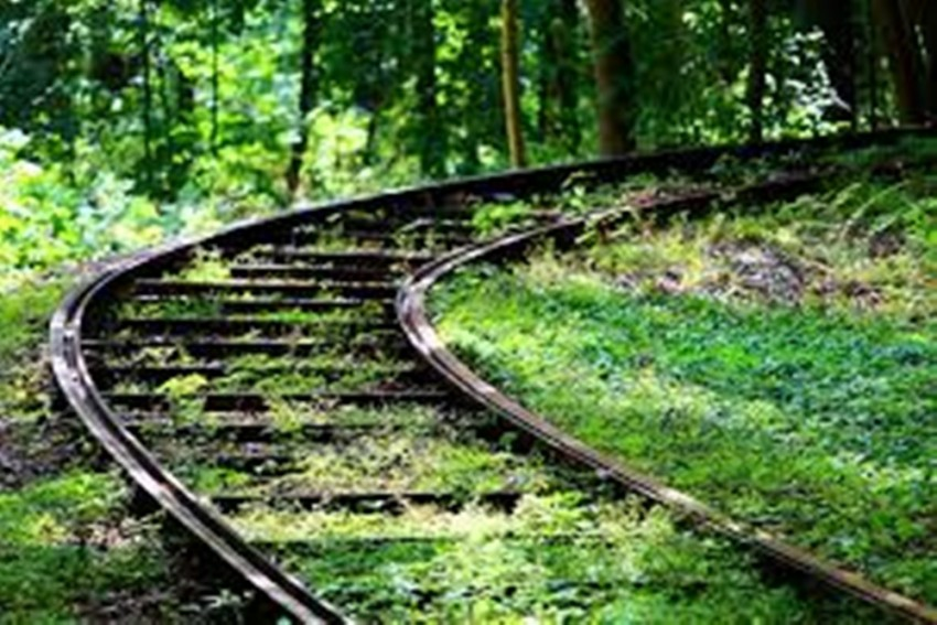 Another Environment Crisis? Wildlife Board Gives Approval To Rail Tracks Through Western Ghats