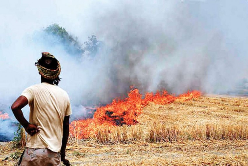 Stubble Burning: How Can North India Control The Pollution?