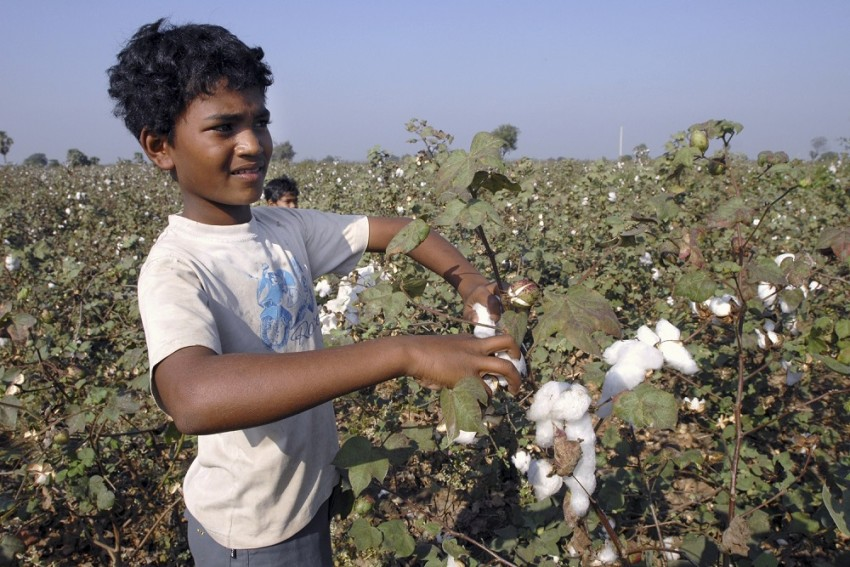 How You Can Take Part In Celebrating World Cotton Day