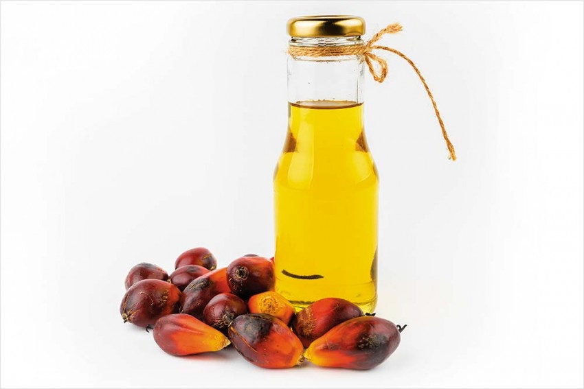 Assam Hosts Business Summit To Attract Investment For Making NE A Palm Oil Production Hub