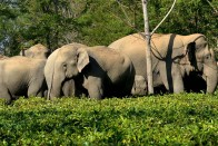 Six Elephants Die In 14 Days In Odisha Sanctuary; CM Calls Authorities For Action Plan