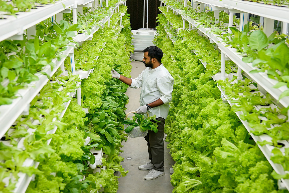 Vertical Farming: With Less Water, Over Smaller Areas