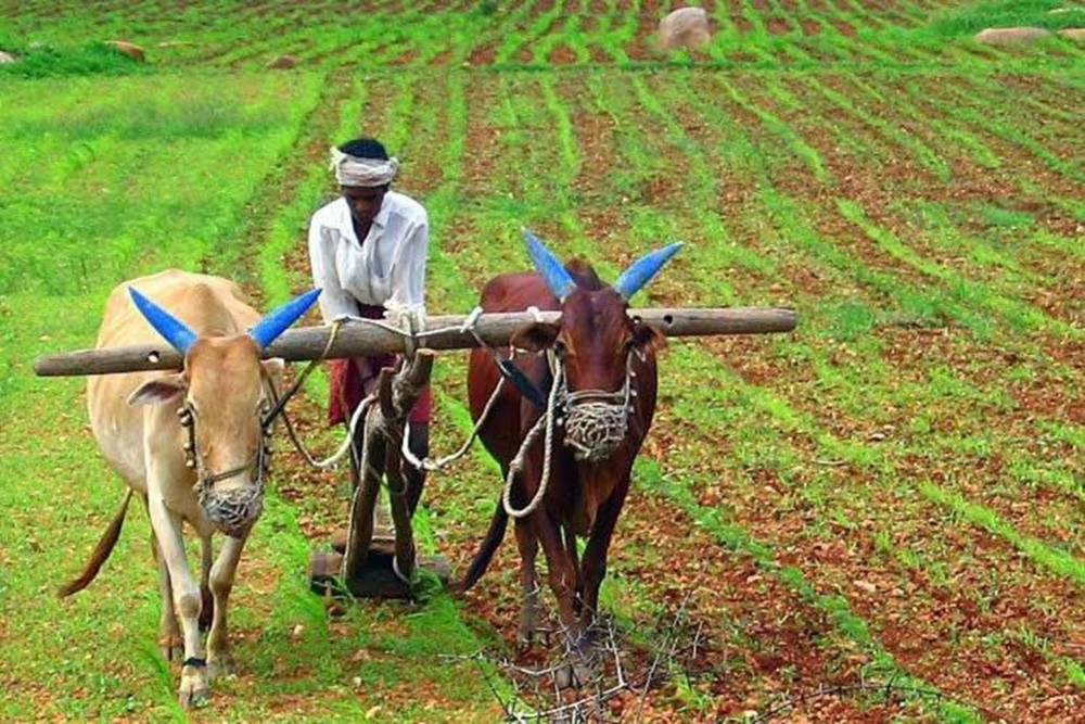 Did Agriculture And Allied Sector Get Due Focus?