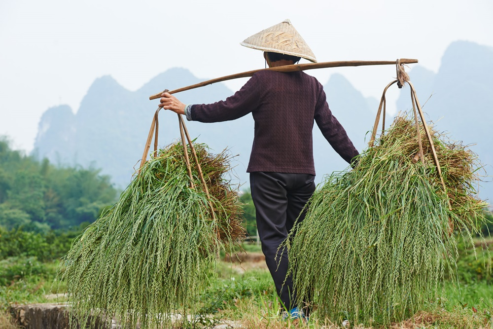 'Agricultural Production Model, Trade Need Urgent Action'