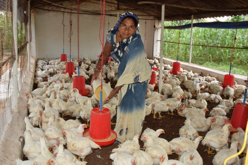 How Eggs And Women Transformed A Malnutrition-Prone Village