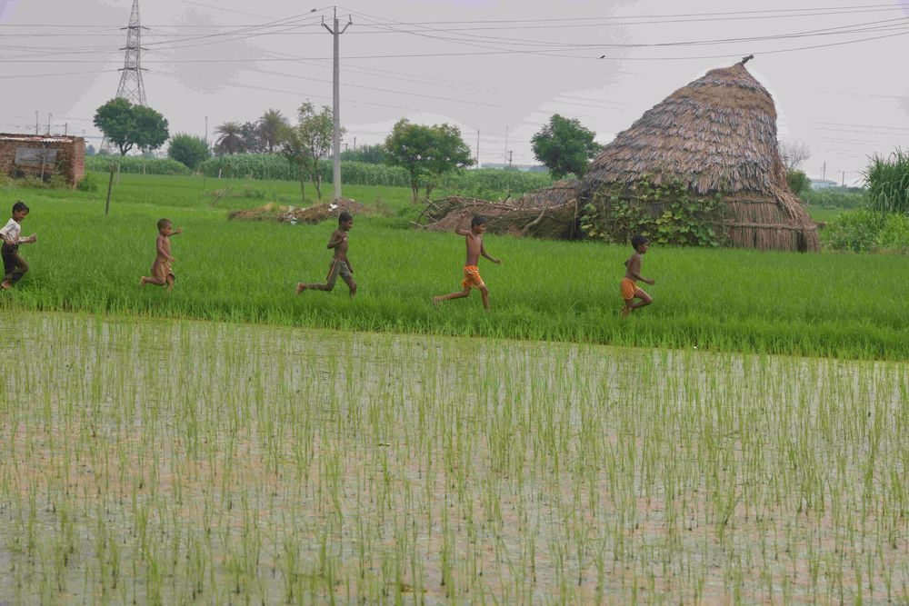 Agriculture Growth 'Bright Spark' In Times Of Pandemic: Study