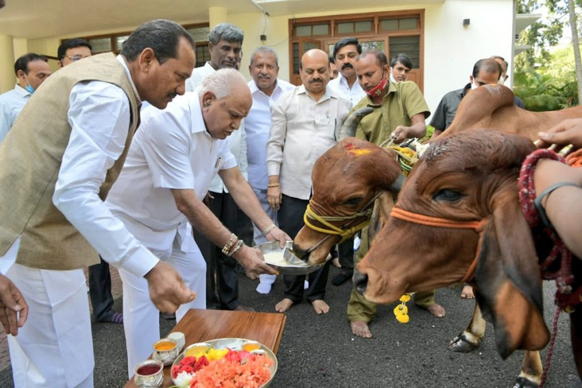 Karnataka CM Celebrates Passage Of Anti-Cow Slaughter Bill By Garlanding Cattle